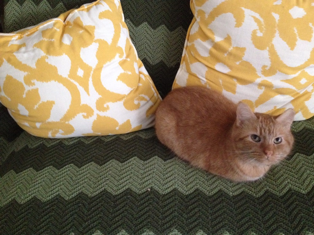 The Cost of Putting Down My Cat - The Billfold